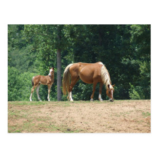 Rocky Mountain mare and colt Postcard