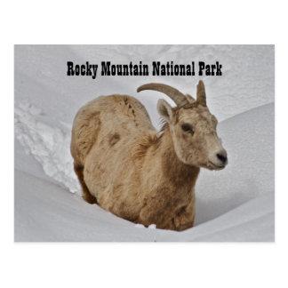 Rocky Mountain National Park Wildlife Postcard