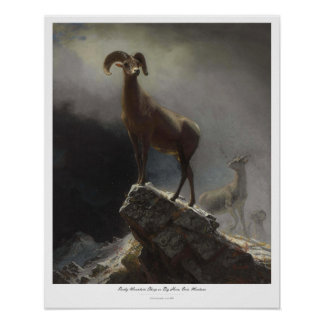 ROCKY MOUNTAIN SHEEP – ALBERT BIERSTADT POSTER