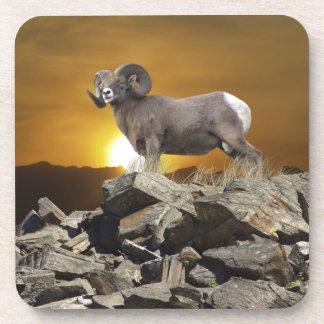 Rocky Mountain Wild Big Horn Sheep & Sunset Coaster
