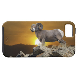 Rocky Mountain Wild Big Horn Sheep & Sunset iPhone SE/5/5s Case