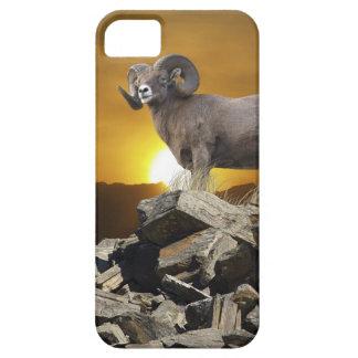 Rocky Mountain Wild Big Horn Sheep & Sunset iPhone SE/5/5s Case