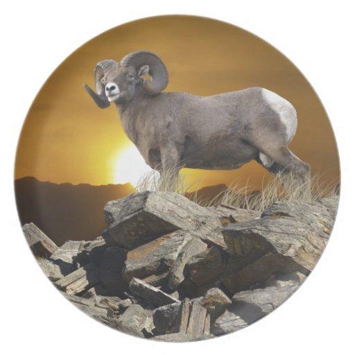 Rocky Mountain Wild Big Horn Sheep & Sunset Dinner Plate