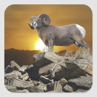 Rocky Mountain Wild Big Horn Sheep & Sunset Square Sticker