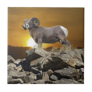 Rocky Mountain Wild Big Horn Sheep & Sunset Ceramic Tile