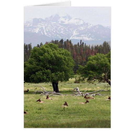 rocky mountains colorado greeting card