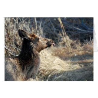 Rocky Mountains Elk Card