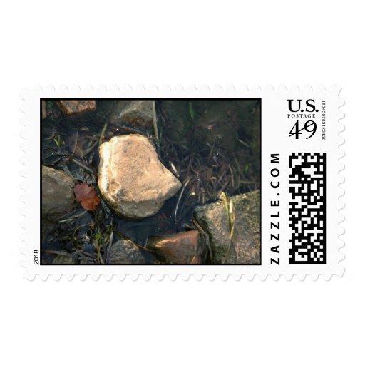 Rocky Stamp