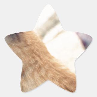 Rocky Star Sticker