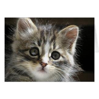 Rocky the Kitten Card