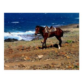 rode on the beach, saddled horse postcard