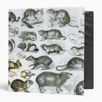 Rodentia-Rodents or Gnawing Animals 3 Ring Binder