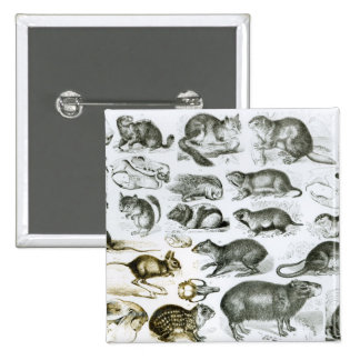 Rodentia-Rodents or Gnawing Animals Button