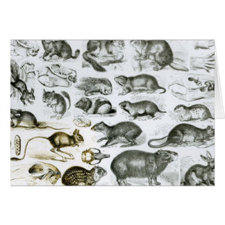 Rodentia-Rodents or Gnawing Animals Greeting Card