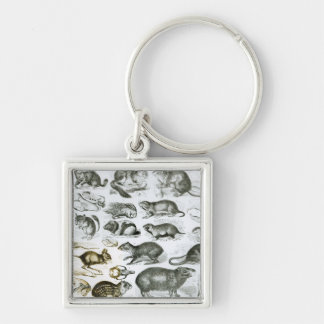 Rodentia-Rodents or Gnawing Animals Silver-Colored Square Keychain