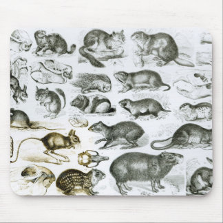 Rodentia-Rodents or Gnawing Animals Mouse Pad