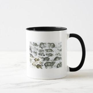 Rodentia-Rodents or Gnawing Animals Mug