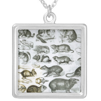 Rodentia-Rodents or Gnawing Animals Square Pendant Necklace