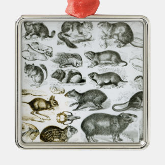 Rodentia-Rodents or Gnawing Animals Square Metal Christmas Ornament