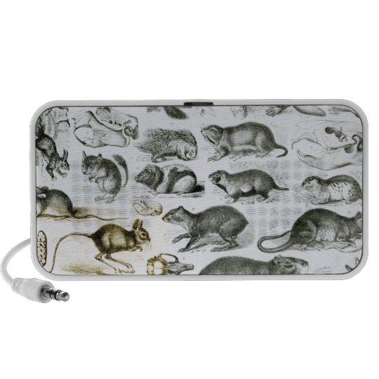 Rodentia-Rodents or Gnawing Animals Portable Speaker