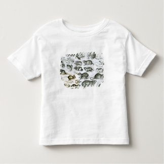 Rodentia-Rodents or Gnawing Animals Toddler T-shirt