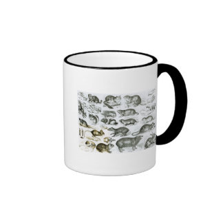 Rodentia-Roedores o animales de roedura Taza De Café