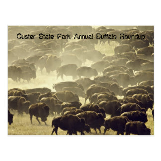 Rodeo anual del búfalo en el parque de estado de C Postales