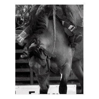 Rodeo Bronco Postcard