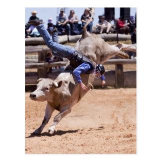 Rodeo Bucking Bull Postales