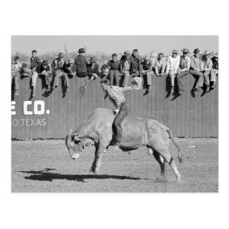 Rodeo Bull Rider, 1940 Postcard