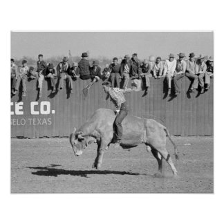 Rodeo Bull Rider, 1940 Posters