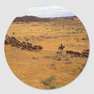 Rodeo del ganado pegatina redonda