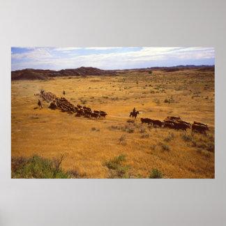 Rodeo del ganado póster