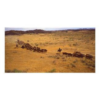 Rodeo del ganado tarjeta fotografica personalizada