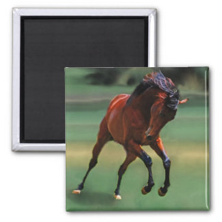 Rodeo horse for the cowboy magnet