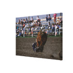 Rodeo rider falling from bull stretched canvas prints