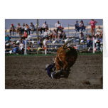 Rodeo rider falling from bull card