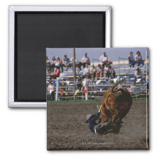 Rodeo rider falling from bull 2 inch square magnet