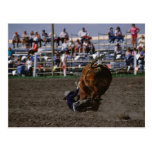 Rodeo rider falling from bull post card