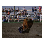 Rodeo rider falling from bull poster