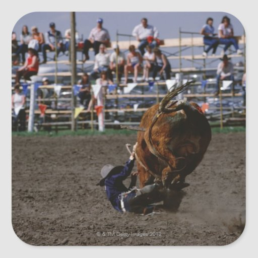 Rodeo rider falling from bull square sticker