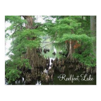 Rodillas de Cypress en el lago Reelfoot Postales