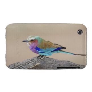 Rodillo de la Lila-breasted (caudata del Coracias) iPhone 3 Case-Mate Fundas