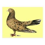 Rodillo oriental que vuela:  Almendra