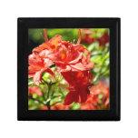 Rododendro Caja De Joyas