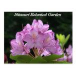 Rododendro de la lila postales