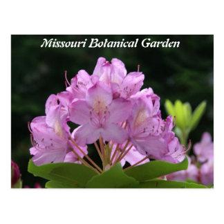 Rododendro de la lila tarjetas postales