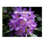 Rododendro de Washington Postal