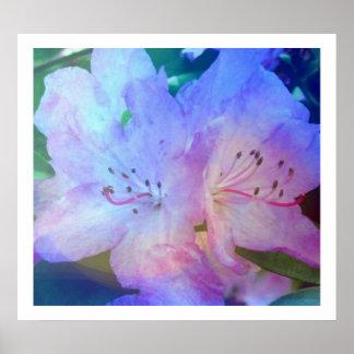 Rododendro del arco iris impresiones