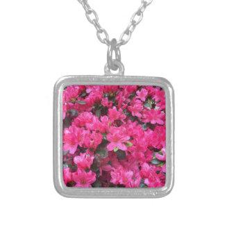 rododendro fucsia de las azaleas colgante cuadrado